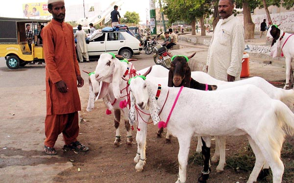 Rabwah – Goats markets in Eid